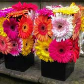 Jens Jakobson Events: Barbican event, multi coloured gerbera