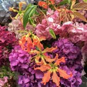 Jens Jakobson Events:  multi-coloured hydrangea, cherry-blossom and nerine