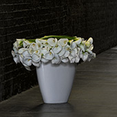 Jens Jakobson Workplace: flowers 4, white lily