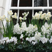 Jens Jakobson Garden: Spring window-box