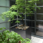 Jens Jakobson Garden: green acer in planter