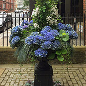 Jens Jakobson Garden: blue hydrangea shrub in fountain planter