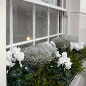 Jens Jakobson Garden: window box, white cyclamen