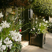 Jens Jakobson Garden: Joanna Wood shop planters - white cyclamen and narcissi