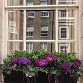 Jens Jakobson Garden: London window box, hydranger and cyclamen